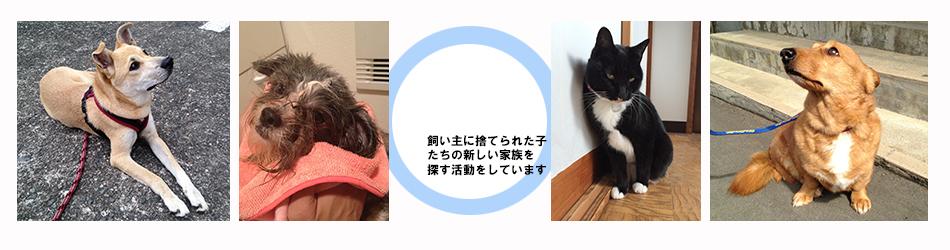 小田原犬猫レスキュー